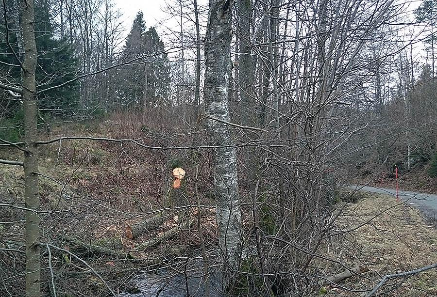 Före sista stolpen innan matningen gick ner i jorden ramlade ett murket träd - så det var två träd som ramlade sammanlagt.