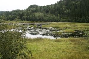 Det är inte mycket öppet vatten kvar i sjön.